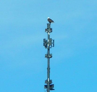 Eagle-mast
